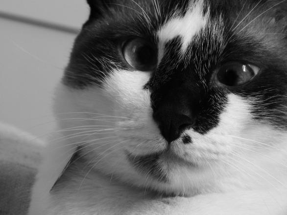 cat-2151400_1920